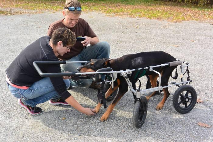 Estes cães em cadeiras de rodas são a coisa mais fofa (15)