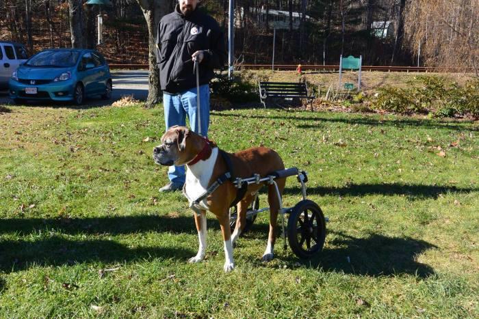 Estes cães em cadeiras de rodas são a coisa mais fofa (18)