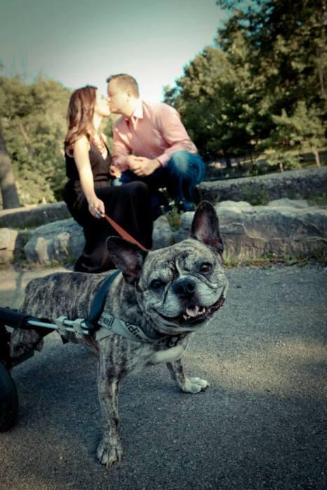 Estes cães em cadeiras de rodas são a coisa mais fofa (20)