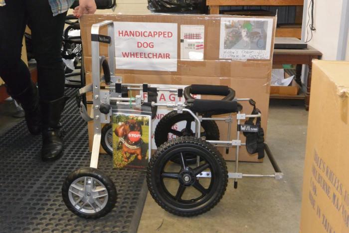 Estes cães em cadeiras de rodas são a coisa mais fofa (5)