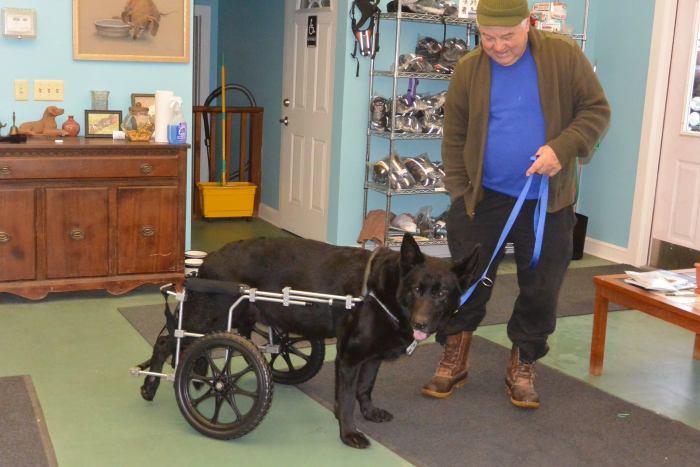 Estes cães em cadeiras de rodas são a coisa mais fofa (8)