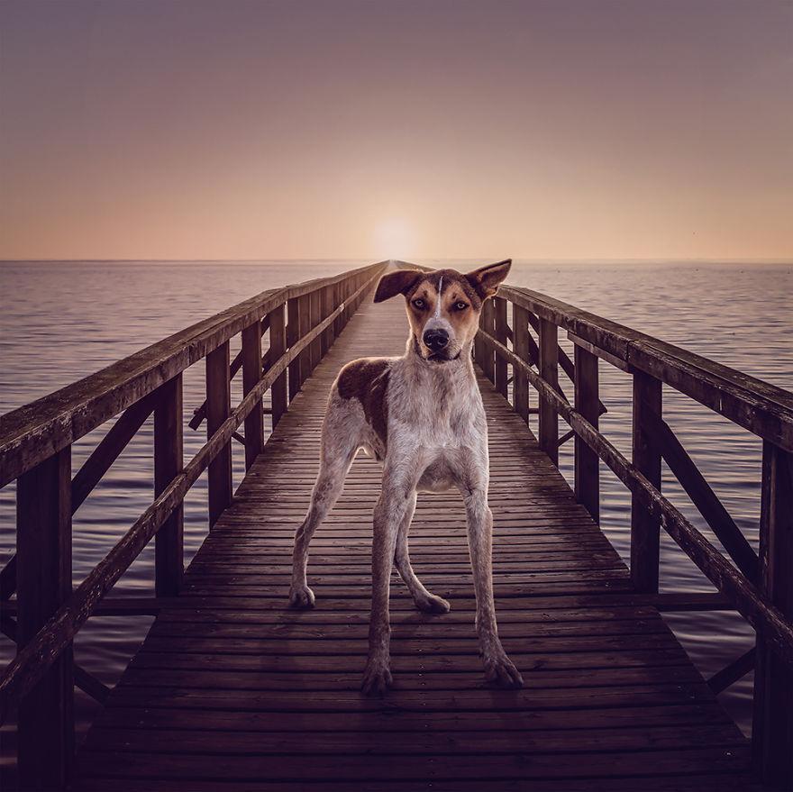 Fotos incríveis de cães para ajudar na adoção (10)