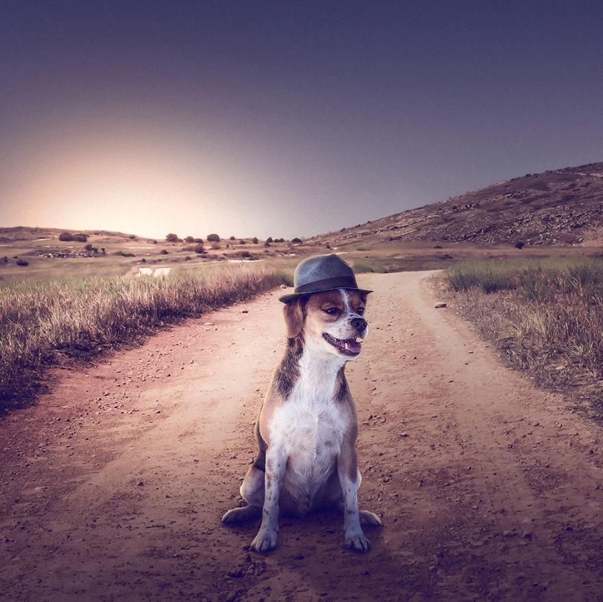 Fotos incríveis de cães para ajudar na adoção (2)