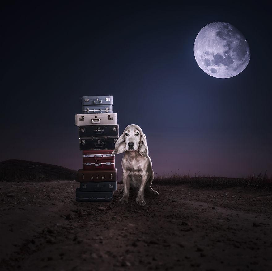 Fotos incríveis de cães para ajudar na adoção (3)