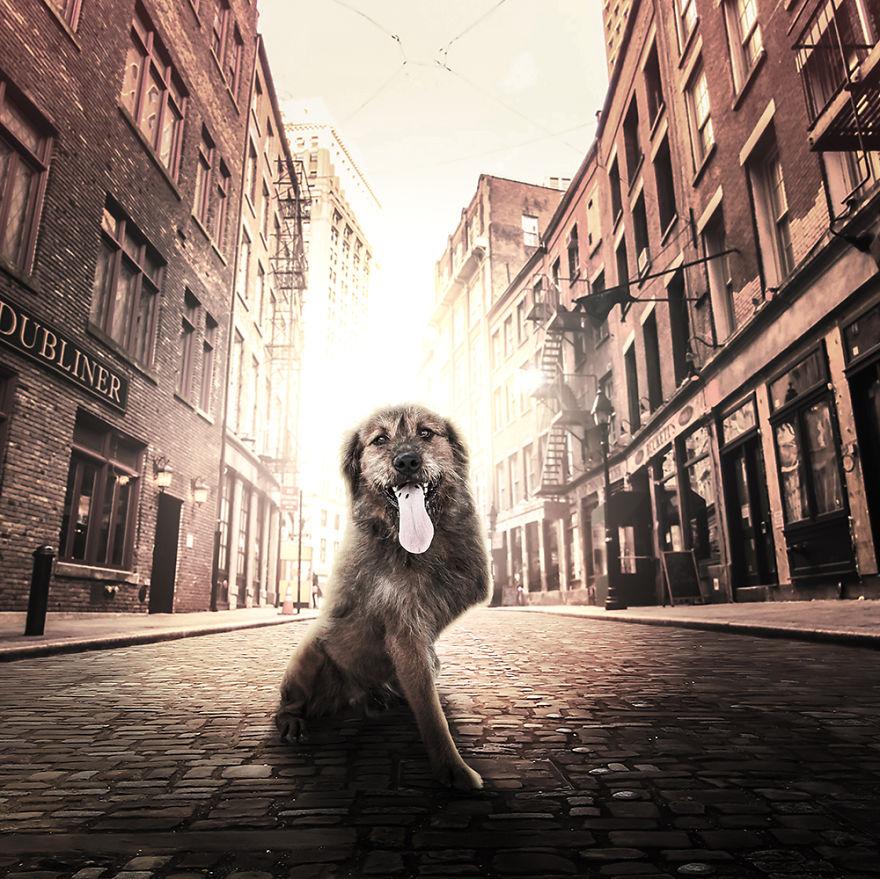 Fotos incríveis de cães para ajudar na adoção (4)