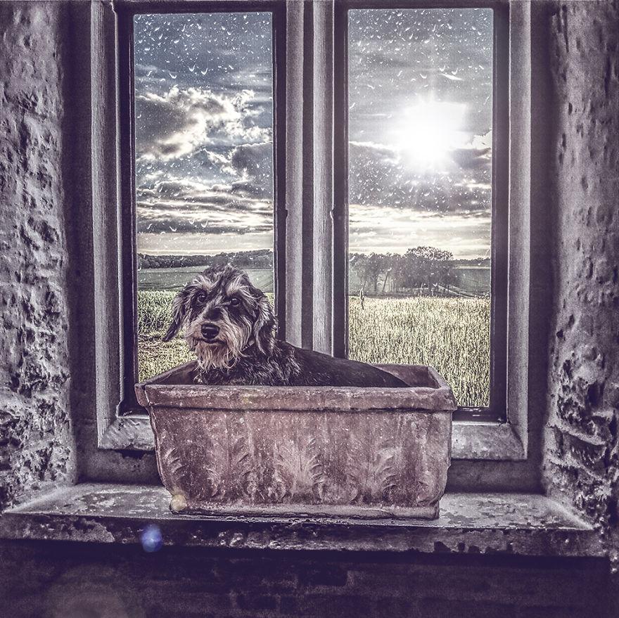 Fotos incríveis de cães para ajudar na adoção (5)