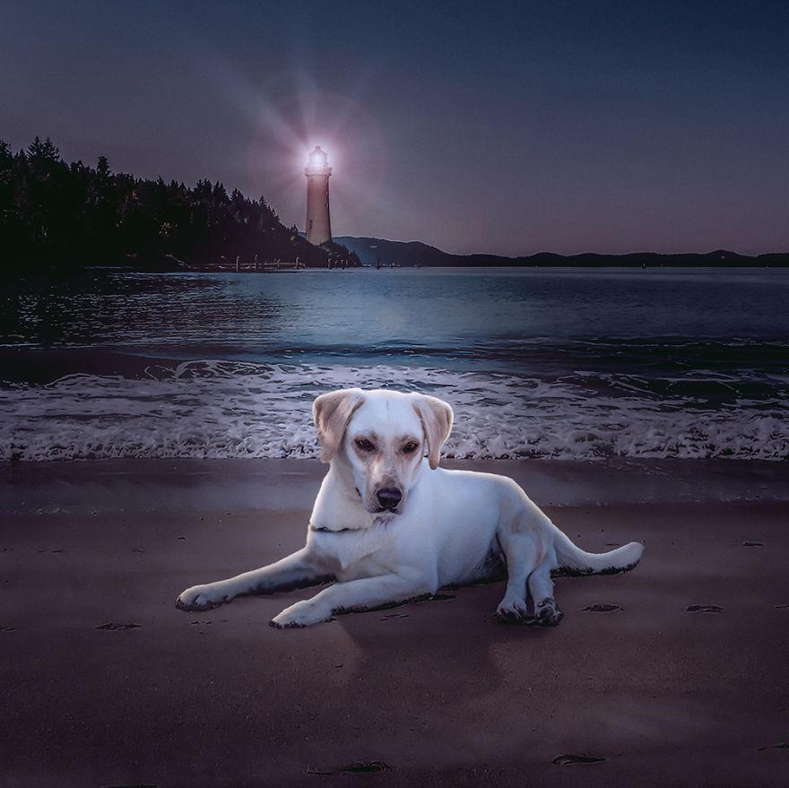 Fotos incríveis de cães para ajudar na adoção (6)