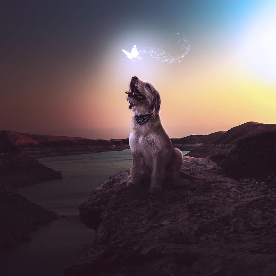 Fotos incríveis de cães para ajudar na adoção (7)