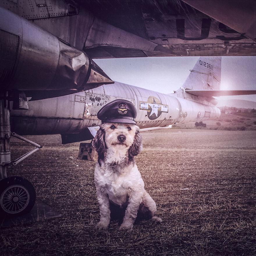 Fotos incríveis de cães para ajudar na adoção (8)