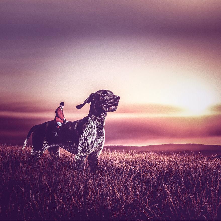 Fotos incríveis de cães para ajudar na adoção (9)