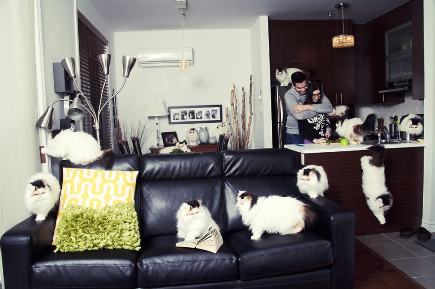 Fotos loucas de Cat Lovers (2)