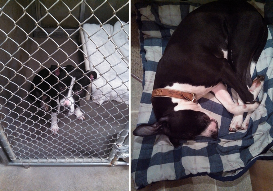 Fotos-mostram-a-diferença-que-uma-adoção-pode-fazer-na-vida-de-um-animal (10)