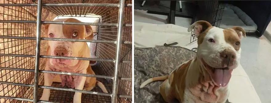 Fotos-mostram-a-diferença-que-uma-adoção-pode-fazer-na-vida-de-um-animal (11)