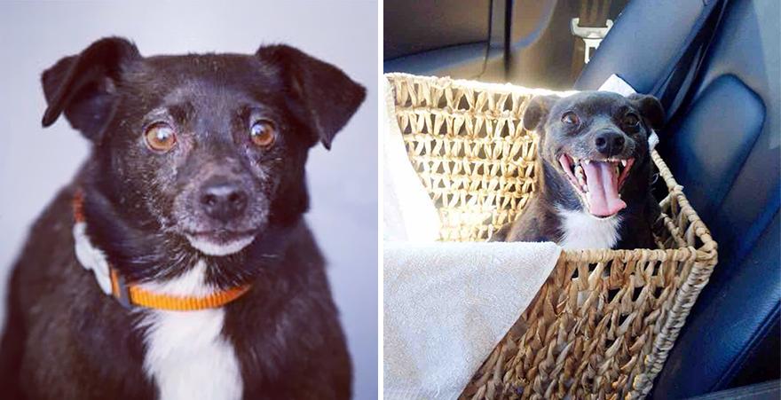 Fotos-mostram-a-diferença-que-uma-adoção-pode-fazer-na-vida-de-um-animal (12)