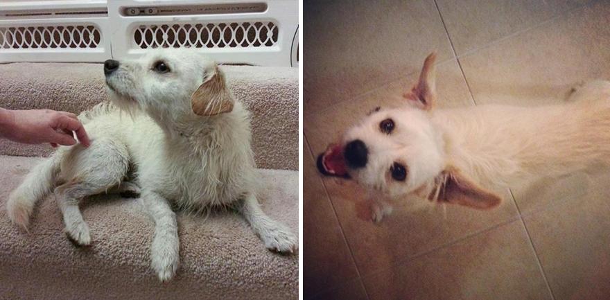 Fotos-mostram-a-diferença-que-uma-adoção-pode-fazer-na-vida-de-um-animal (14)