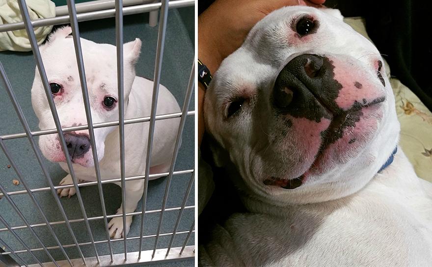 Fotos-mostram-a-diferença-que-uma-adoção-pode-fazer-na-vida-de-um-animal (15)