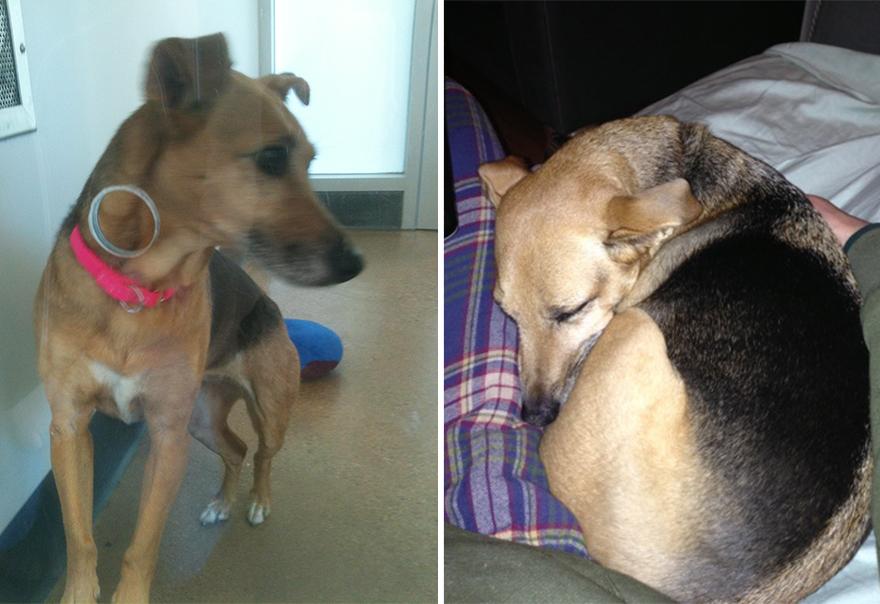 Fotos-mostram-a-diferença-que-uma-adoção-pode-fazer-na-vida-de-um-animal (16)