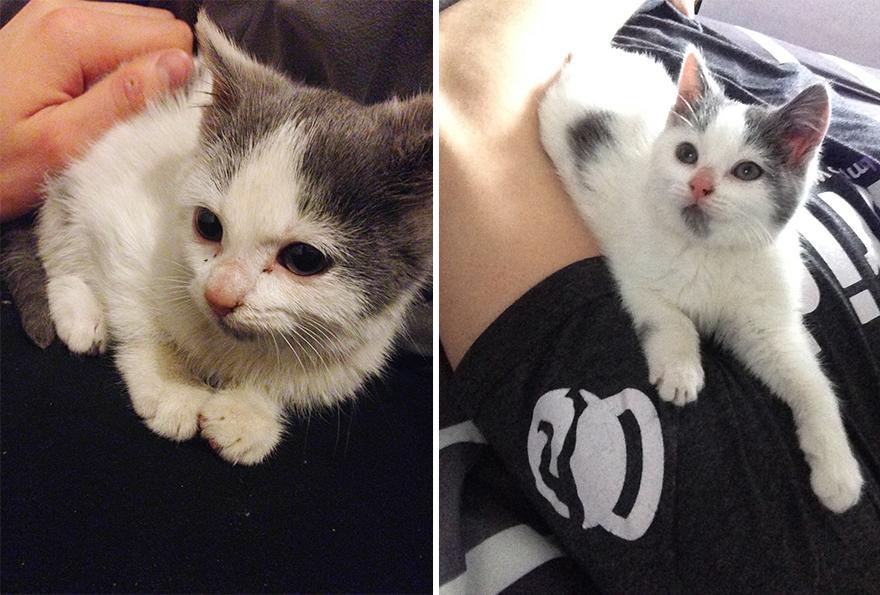 Fotos-mostram-a-diferença-que-uma-adoção-pode-fazer-na-vida-de-um-animal (3)