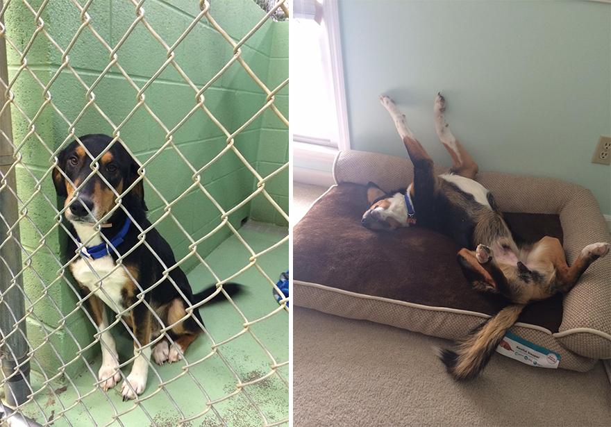 Fotos-mostram-a-diferença-que-uma-adoção-pode-fazer-na-vida-de-um-animal (4)