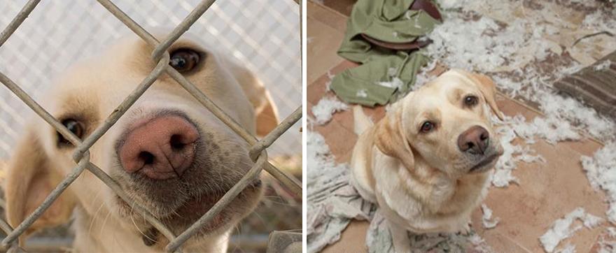 Fotos-mostram-a-diferença-que-uma-adoção-pode-fazer-na-vida-de-um-animal (6)