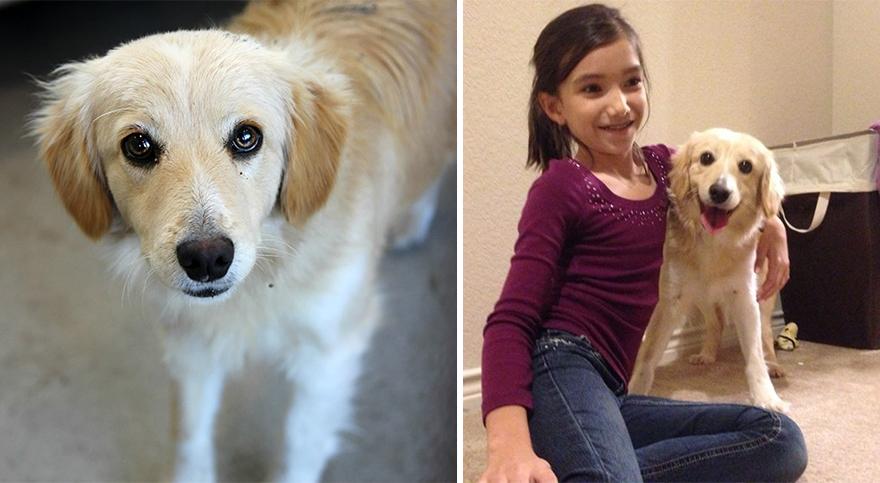Fotos-mostram-a-diferença-que-uma-adoção-pode-fazer-na-vida-de-um-animal (7)