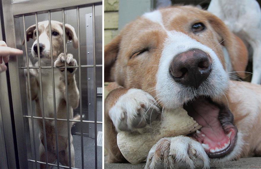 Fotos-mostram-a-diferença-que-uma-adoção-pode-fazer-na-vida-de-um-animal (9)