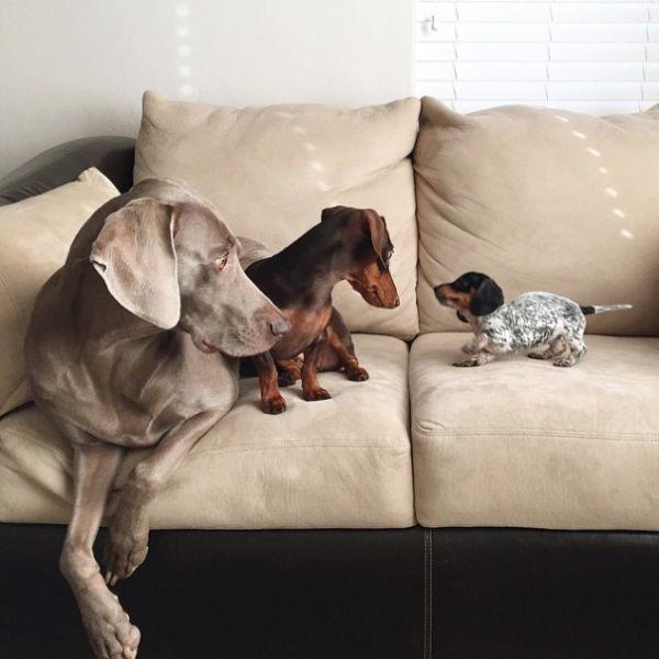 Harlow e Indiana ganharam um novo amigo (3)