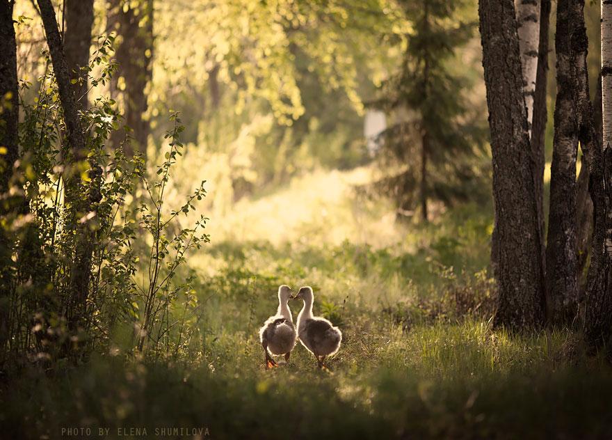 Mãe russa tira incríveis fotos de animais com seus filhos (4)