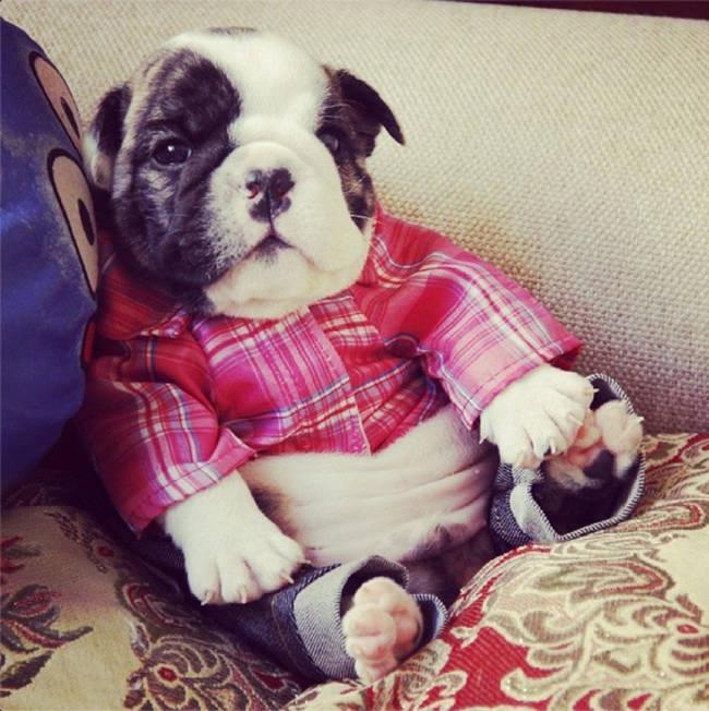 Os-menores-e-mais-fofos-cachorrinhos-que-você-verá-hoje (17)
