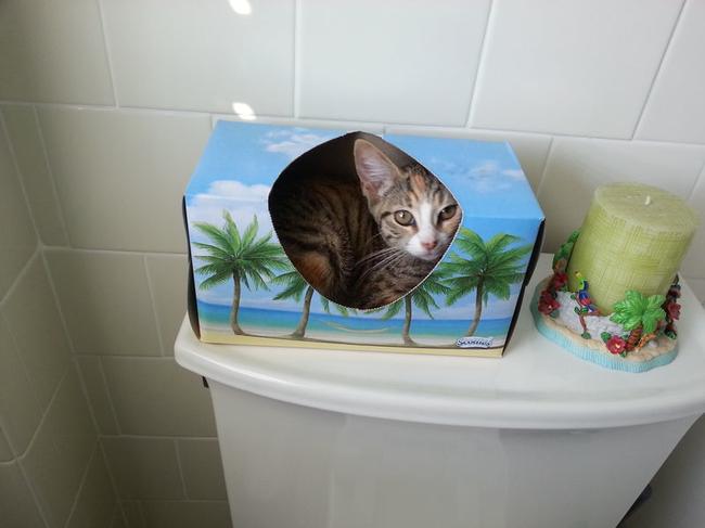 Sinais-de-que-seu-gato-está-te-traindo (1)
