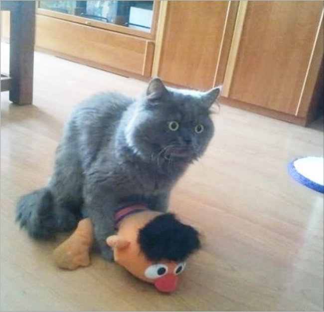 Sinais-de-que-seu-gato-está-te-traindo (2)