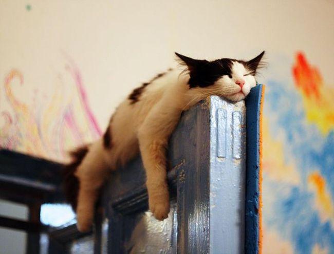 Sinais-de-que-seu-gato-está-te-traindo (3)