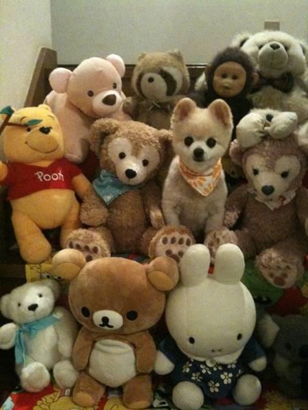 Tente-descobrir-quais-são-os-animais-reais-e-os-animais-de-pelúcia (10)