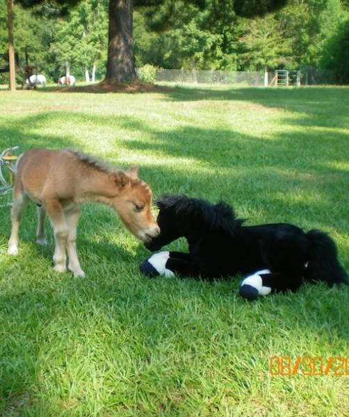 Tente-descobrir-quais-são-os-animais-reais-e-os-animais-de-pelúcia (17)