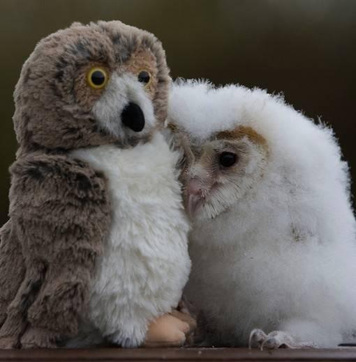 Tente-descobrir-quais-são-os-animais-reais-e-os-animais-de-pelúcia (19)