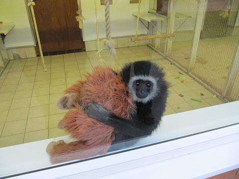 Tente-descobrir-quais-são-os-animais-reais-e-os-animais-de-pelúcia (26)
