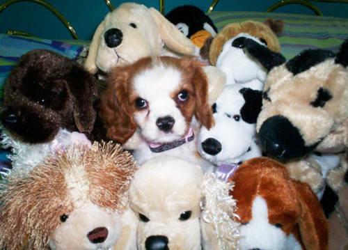 Tente-descobrir-quais-são-os-animais-reais-e-os-animais-de-pelúcia (6)