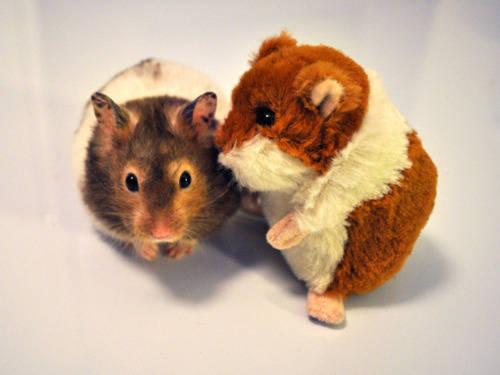Tente-descobrir-quais-são-os-animais-reais-e-os-animais-de-pelúcia (8)