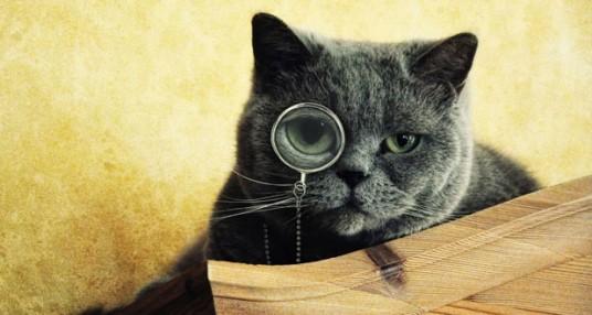 15 curiosidades sobre gatos que talvez você não sabia
