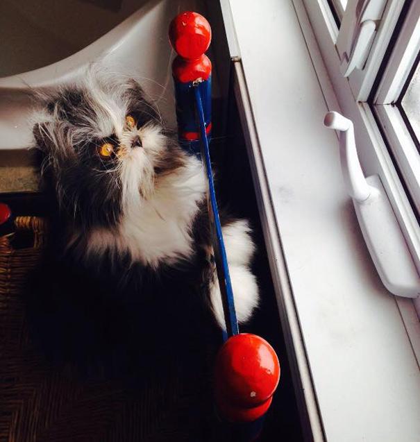 Atchoum O gato cujo o olhar irá devorar sua alma (1)