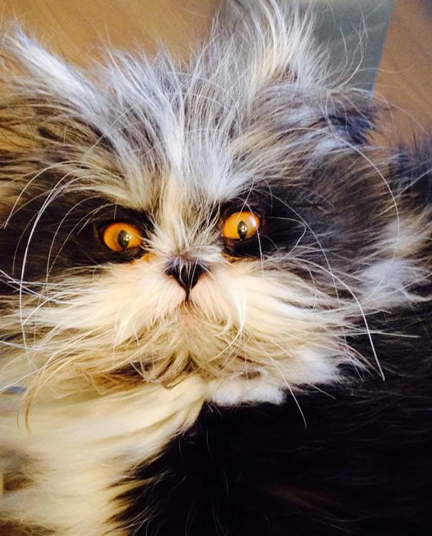 Atchoum O gato cujo o olhar irá devorar sua alma (10)