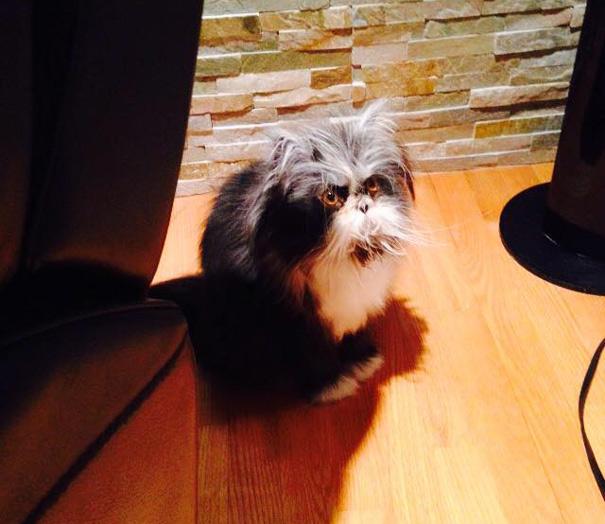 Atchoum O gato cujo o olhar irá devorar sua alma (11)