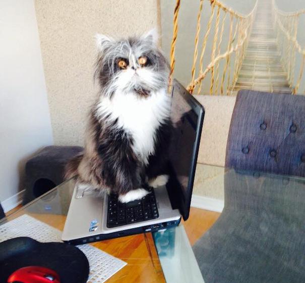 Atchoum O gato cujo o olhar irá devorar sua alma (12)