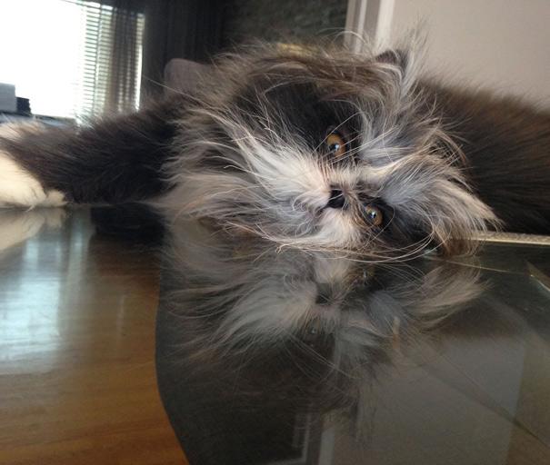 Atchoum O gato cujo o olhar irá devorar sua alma (14)
