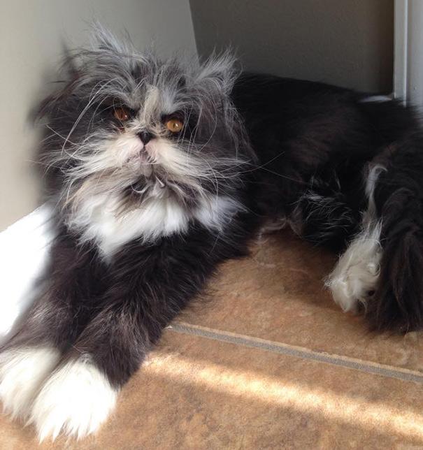 Atchoum O gato cujo o olhar irá devorar sua alma (15)