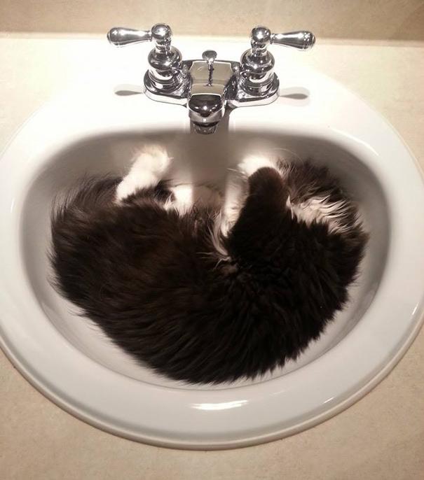 Atchoum O gato cujo o olhar irá devorar sua alma (16)
