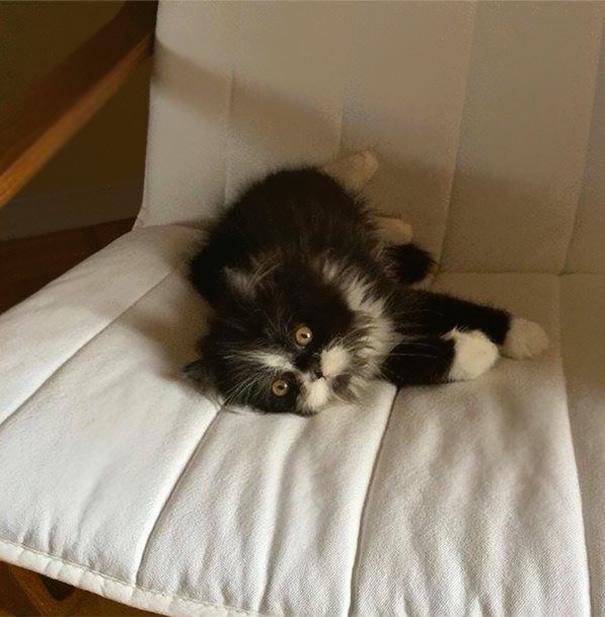 Atchoum O gato cujo o olhar irá devorar sua alma (17)