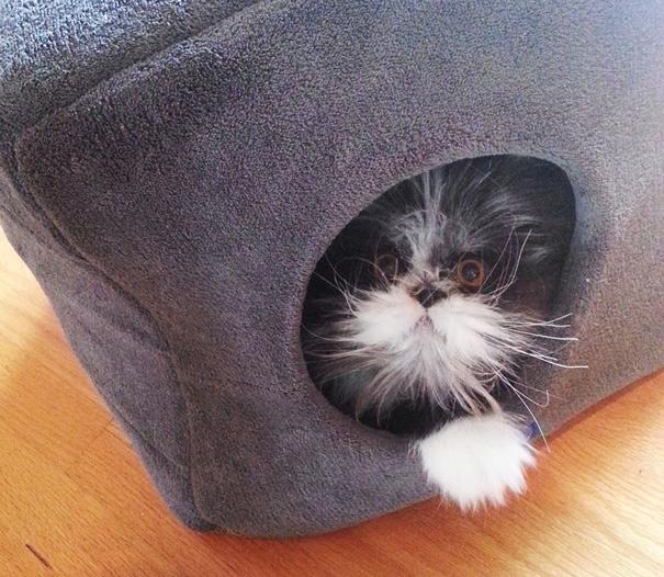 Atchoum O gato cujo o olhar irá devorar sua alma (18)