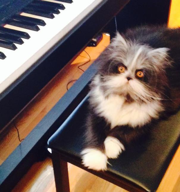 Atchoum O gato cujo o olhar irá devorar sua alma (19)