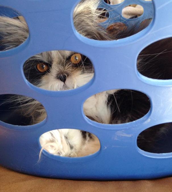 Atchoum O gato cujo o olhar irá devorar sua alma (2)